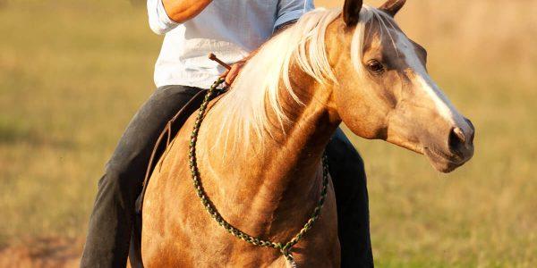 Das-kompetente-Pferd